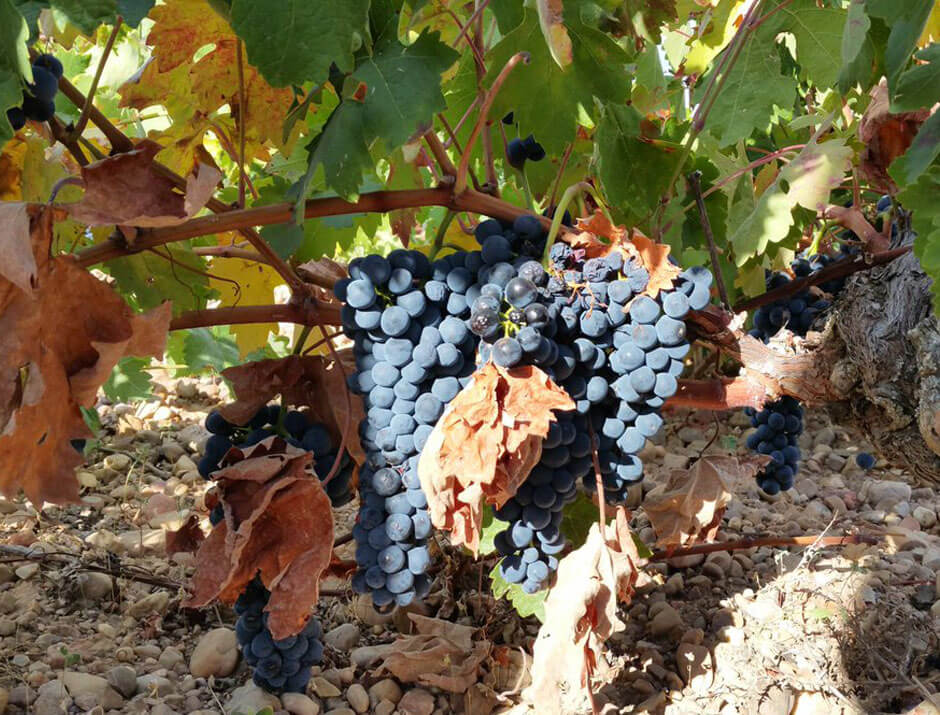 vinos de segovia